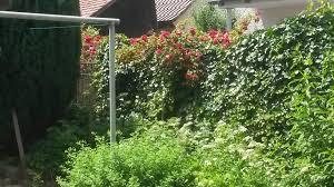 Einfamilienhaus Mit Garten Kaufen Haus Kaufen Bad Buchau 88422 Biberach Kreis U2014 Haus Kaufen 24 De