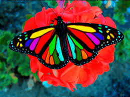 Most Beautiful Colors by Butterflies Free Download Clip Art Free Clip Art On Clipart