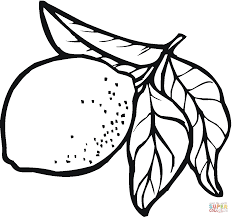 lemon leaves whole lemon and its cross section coloring page
