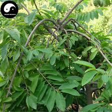buy annona squamosa fruit tree seeds 60pcs plant sweetsop for