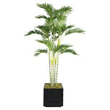 indoor plants wayfair palm tree in planter loversiq