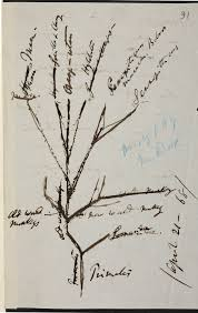 darwin u0027s evolutionary trees