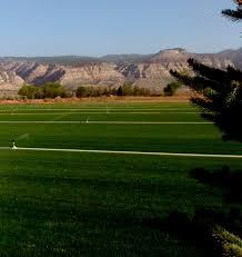 all american sod farm best turf grass sod producer in utah all