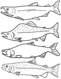 salmon fish coloring page free coloring page of salmon fish free printable fish coloring