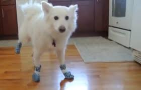 protect hardwood floors protecting wood floors with dog boots high tech flooring and design