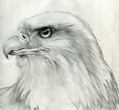 bald eagle alaska jpg for da boids pinterest bald eagle