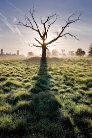 one dead tree 20 photos