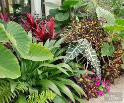 Summer Flower Garden Ideas - 407 best garden ideas for my house in oyarifa ghana images on