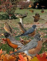 book the crossley id guide raptors
