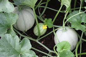 family vegetable garden planning for your 2001 vegetable garden