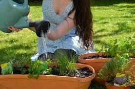 les herbes de cuisine faire pousser des plantes aromatiques chez soi petit guide