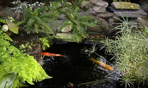 small backyard pond ideas small garden pond idea small goldfish