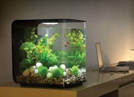 Aquarium Decor Ideas Aquariums U0026 Decor