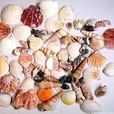 assorted seashells color mix sea shells vase market