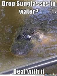reptile memes 1 reptiles amino