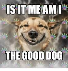 Smiling Dog Meme - 25 best memes about happy birthday smiling dog happy birthday