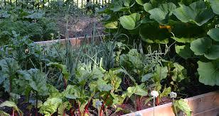 10 tips for harvesting your vegetable garden frankie flowers