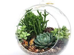 succulent terrarium diy kit woodsy6 inch
