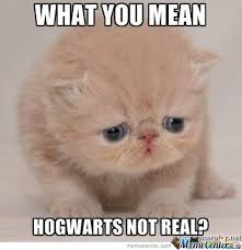 Disappoint Meme - disappointment cat meme cat best of the funny meme