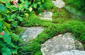 small shade garden ideas photograph 16 garden rockery gard