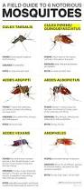 Where Do Mosquitoes Hide In Your Room by How To Identify The Mosquitoes That Spread Zika And Dengue