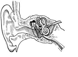Coloring Page Ear Internal And External Img 15716 Ear Coloring Page