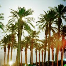 best palm trees for home gardens sunset