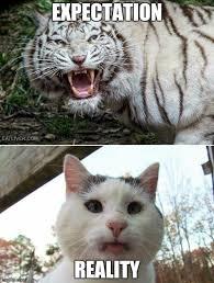 Tiger Meme - tiger cat memes imgflip