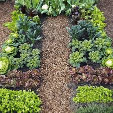 278 best gardening images on pinterest gardening plants and