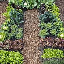 best 25 winter vegetable gardening ideas on pinterest fall
