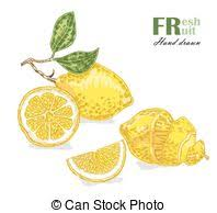 eps vectors of pineapple fruit color sketch draw isolated over