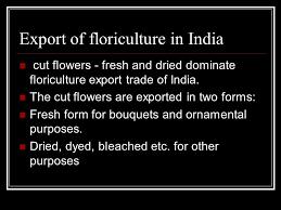 export importof floriculture in india ppt