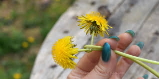 real flowers how to make a dandelion flower crown with real flowers amanda