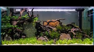 Aquascape Chicago 2016 Aquatic Experience Aquascaping Competition Youtube
