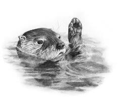 drawn otter river otter pencil and in color drawn otter river otter