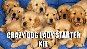Crazy Dog Lady Meme - crazy dog lady starter kit puppiessss meme generator