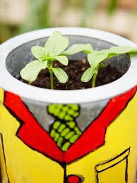 in door plant put in pot vide how to plant sunflowers in decorative pots hgtv