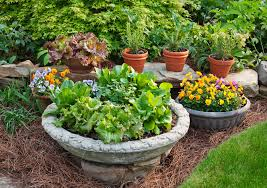 how many pots can you fill with a bag of soil bonnie plants