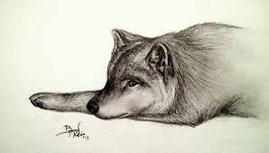 lonely wolf sketch by yukilapin on deviantart