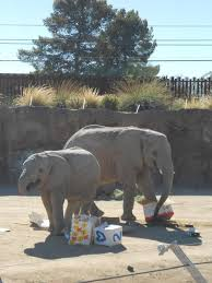 The Blind Men And The Elephant Analysis A Ruin Of Elephants Trans Species Love Labor And Loss