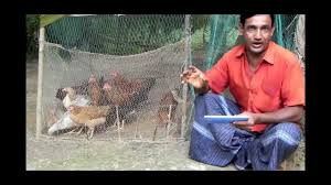 Backyard Poultry In India Alternative Income Generation Poultry Farming Youtube