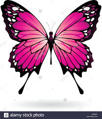 vector illustration of a colorful butterfly isolated on a white