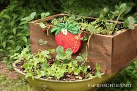Diy Strawberry Planter by Diy Rolling Strawberry Wheelbarrow Planter Empress Of Dirt