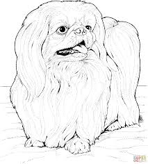 lhasa apso coloring page free printable coloring pages