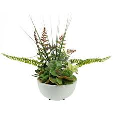 Desk Plant Succulents U0026 Cactus Plants You U0027ll Love Wayfair