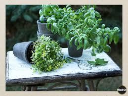 Herb Garden Winter - growing herbs u0026 herb garden care herbs garden vegetable garden
