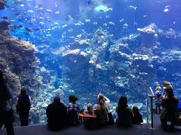 Cheapest Cost Of Living In California by California Academy Of Sciences Ticket Deal Review
