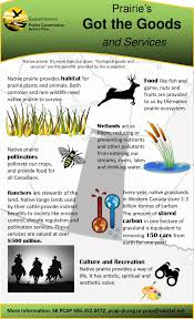 native plants in alberta saskatchewan prairie conservation action plan sk pcap
