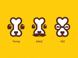 Ð¡ookies for dogs Logo Logo and Branding Identity