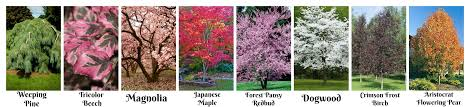 ornamental trees